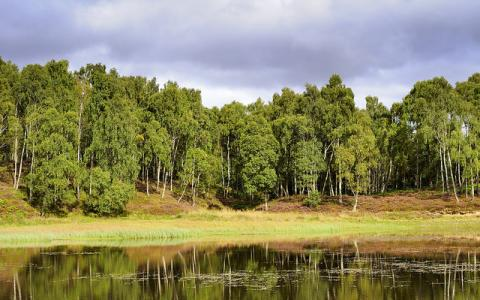 Silver Birch trees and small lochan, Craigellachie NNR, East Highland Area.  :copyright:Lorne Gill/SNH