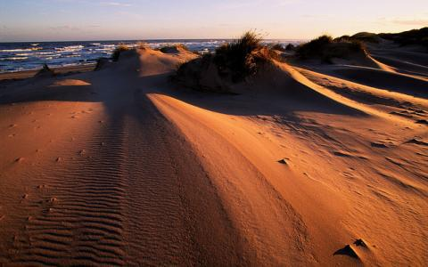 Evening light on the sand dunes at Sands of Forvie NNR, Grampian Area..  :copyright:Lorne Gill