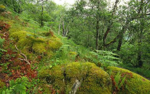 Moss covered boulders at Glasdrum NNR...:copyright:Lorne Gill/SNH.
